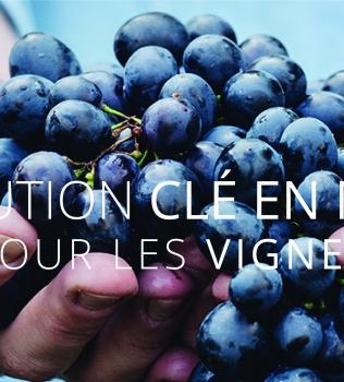 VignaWeb une solution pour les vignerons
